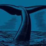 Buchtipp: Ian McGuire – Nordwasser